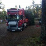 transport av stort tre fra skogen